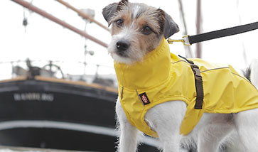 Hundebekleidung, Hundemantel