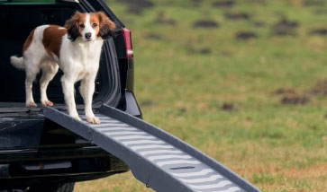Hundetransport, Hund unterwegs
