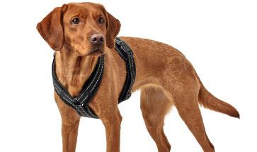 Gute Passform und hohe Qualität, das sind Hundegschirre von Hunter.
