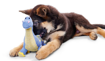 Hunter Hundespielzeug