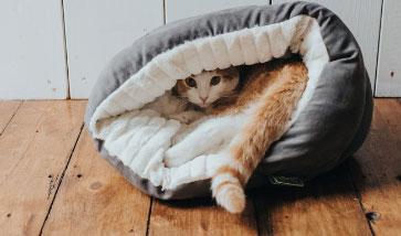 Katzenhöhlen, Katzenbetten, Katzenkissen