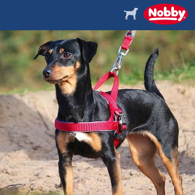 Nobby Hundegeschirre