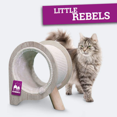 Petrebels Little Rebels