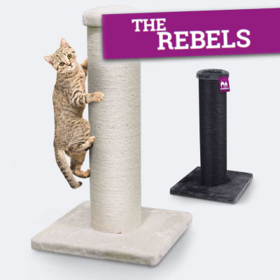 Petrebels The Rebels