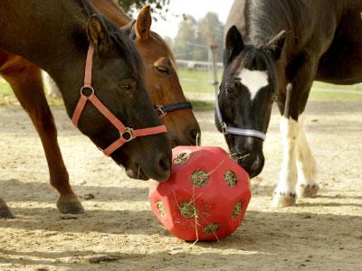 Spielzeug für Pferde