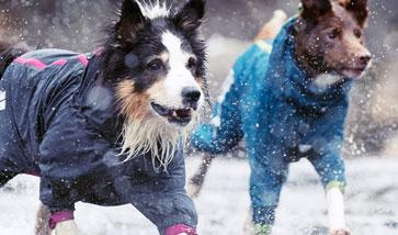 Hunde Regenmäntel