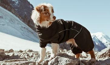 Hunde Wintermantel