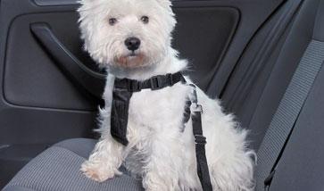 Hunde Sicherheitsgeschirre Autogeschirre