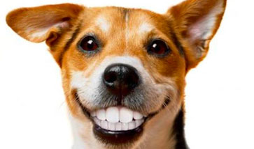 Hunde Zahnpflege
