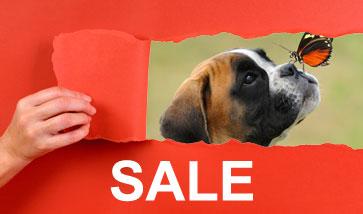 Hundezubehör SALE Angebote