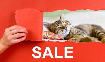 Katzenzubehör SALE Angebote